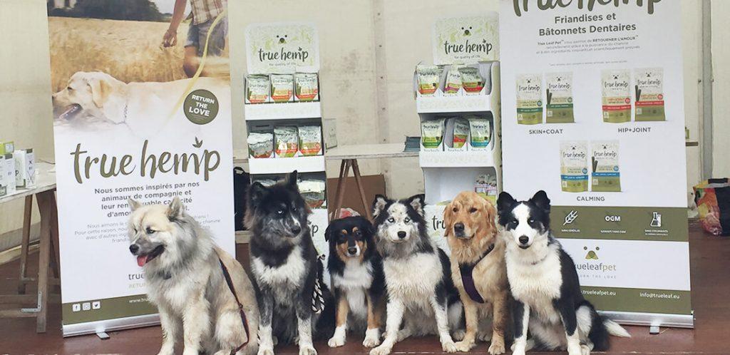 evenement-woofrun-chiens-1024x498